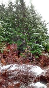 Rain, sleet, snow...