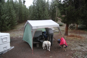 The pups and our eating shelter. Cedric is wearing 2 coats to keep him warm. Brrr!