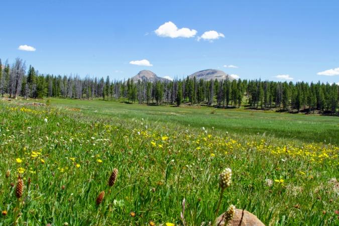 Uinta Mountain Meadow